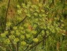 В Наро-Фоминске подполковник едва не умер из-за ядовитой травы - борщевика