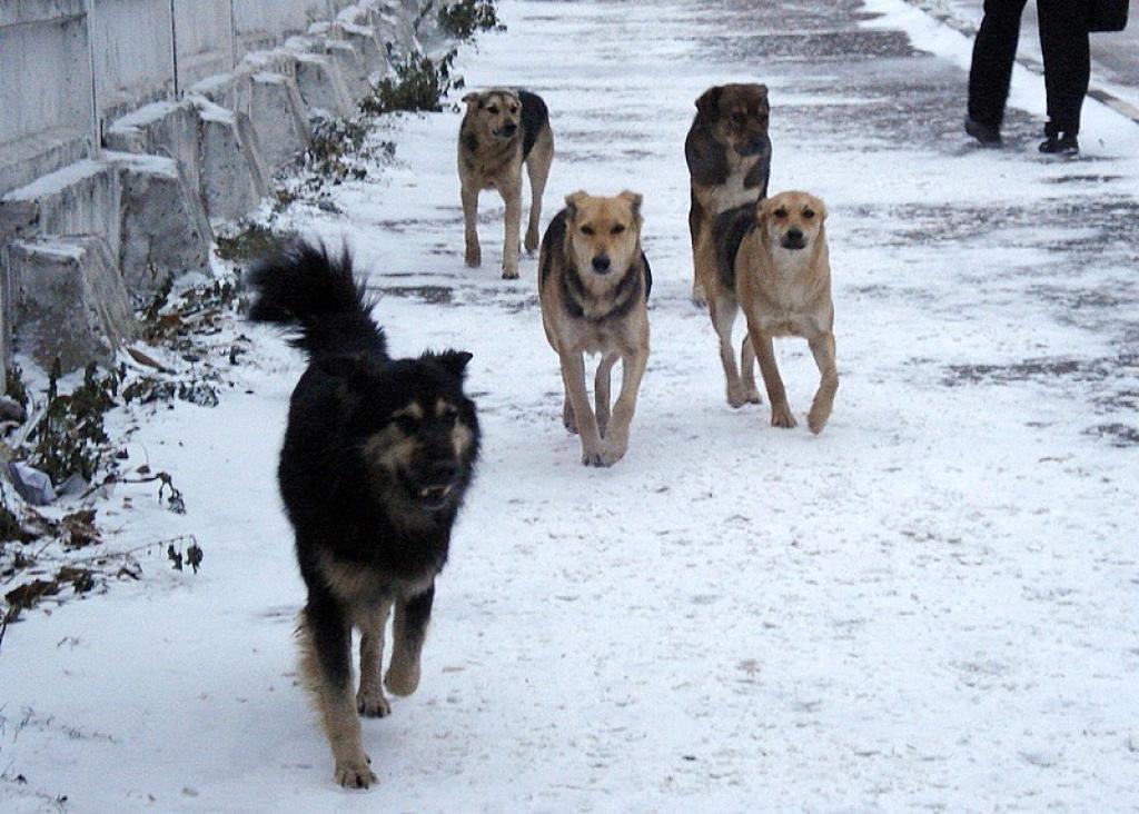 «Всех собак повесили» на глав муниципалитетов