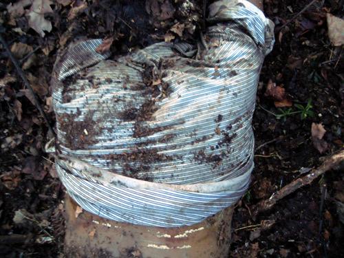 Человеческие останки обнаружены в лесу близ Селятино