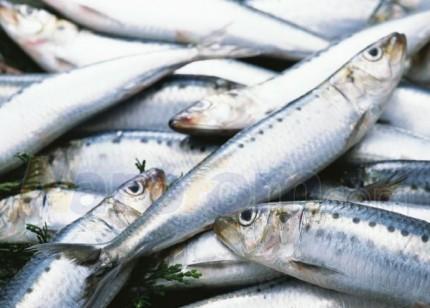 В Селятино построят комбинат по переработке рыбы