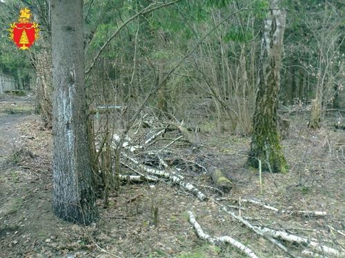 Комитет лесного хозяйства Московской области выиграл суд о лесах в Селятино